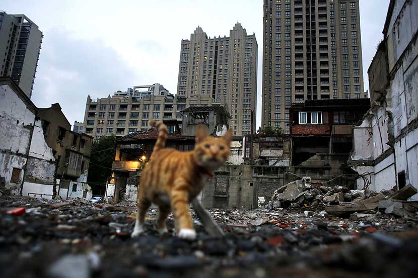 A cat walks through the site of a demolished building in Xintiandi, one of the most expensive areas in Shanghai, Sept. 10, 2014. Carlos Barria/Reuters