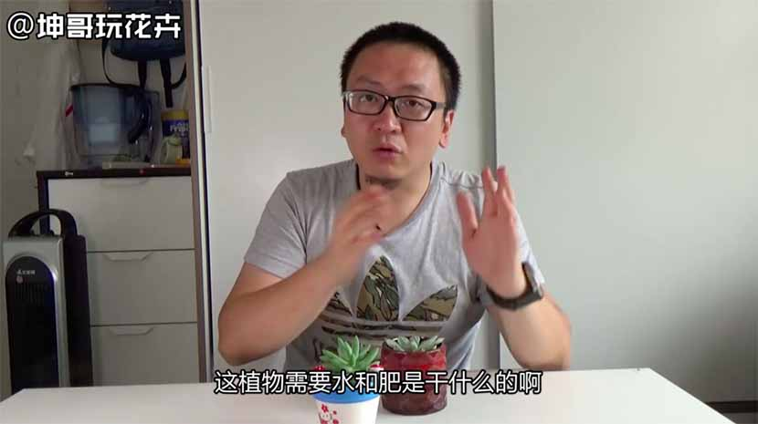A screenshot from a video on Zhu Kun's Toutiao blog shows him lecturing viewers on how to raise succulent plants, such as cactuses.