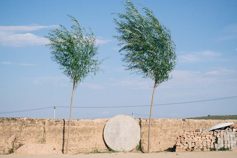 Two trees grow outside a villager's home, Ningxia Hui Autonomous Region, Sept. 20, 2016. The area has suffered from severe desertification in recent years. Xiao Muyi/Sixth Tone