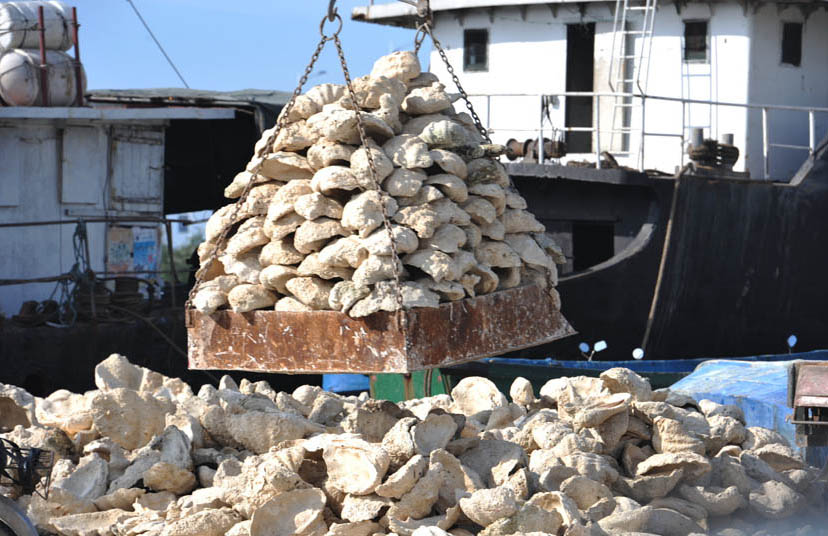 Giant clam shells are unloaded from a boat in Tanmen, Hainan province, April 24, 2013. Chen Xuelun/IC