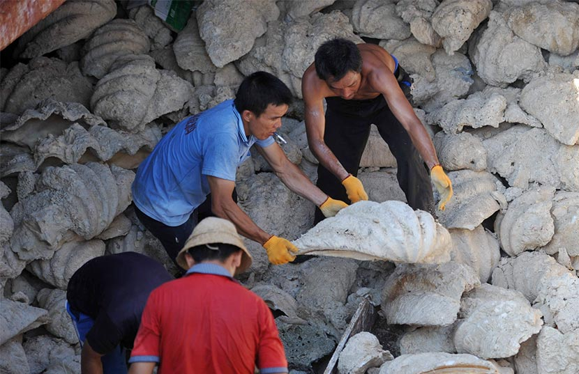Men unload giant clam shells at a dock in Tanmen, Hainan province, April 24, 2013. Chen Xuelun/IC