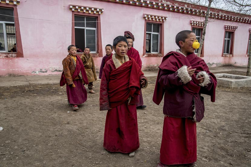 Young monks gather in the courtyard outside their classroom at the Payul monastery on the Tibetan Plateau, March 19, 2016. Luc Forsyth for Sixth Tone