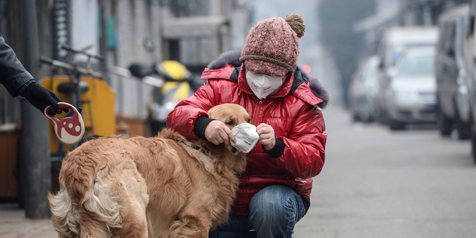 British Snout Masks to Protect Chinese Dogs From Air PollutionAir Pollution Effects On Animals