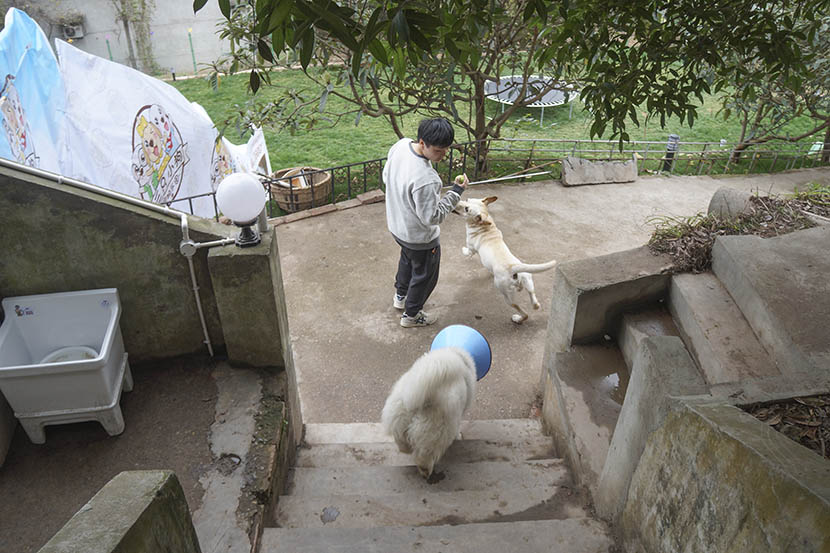 Fang Ling plays with dogs staying at her dog hotel in rural Chengdu, Sichuan province, March 4, 2017. Fan Yiying/Sixth Tone