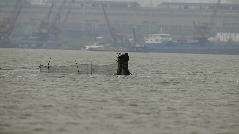 A fisherman uses a maze fishing net despite a fishing ban in place at the Yangtze River, March 21, 2016. Maze fishing nets are named after their labyrinthine quality — once a fish is caught, it never finds its way out. Usage of the net is illegal. Hui Ying for Sixth Tone
