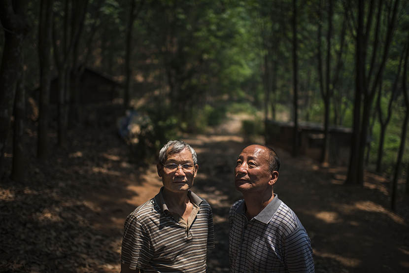 Two friends of Gu Xia's father, also Shanghai 'zhiqing,' at a rubber farm in Jinghong, Yunnan province, April 17, 2016. Wu Yue/Sixth Tone