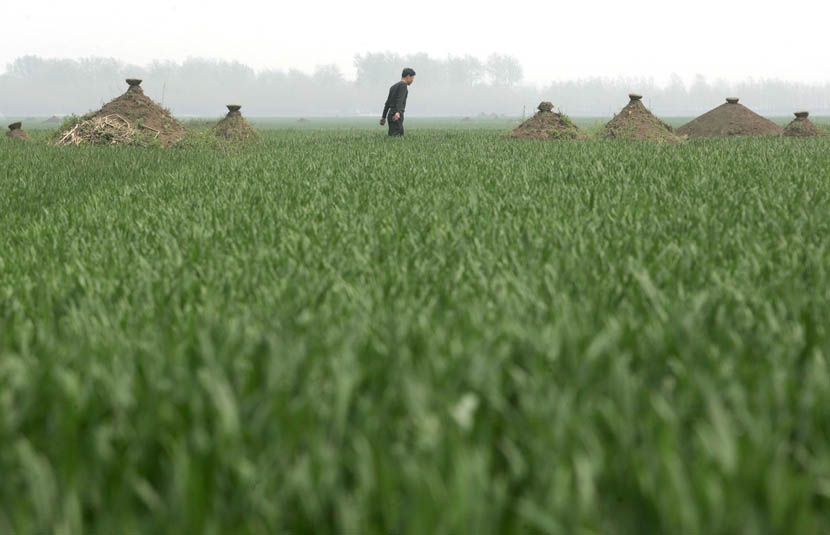 Fan Yong walks among graves on a farm in Wenlou Village, Shangcai County, Henan province, April 5, 2006. Xu Haifeng/Sixth Tone
