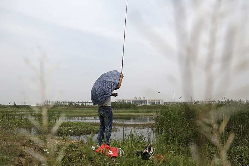 A man goes fishing on a pond near the high-speed train station in Dingyuan, Anhui province, May 24, 2016. Han Meng/Sixth Tone