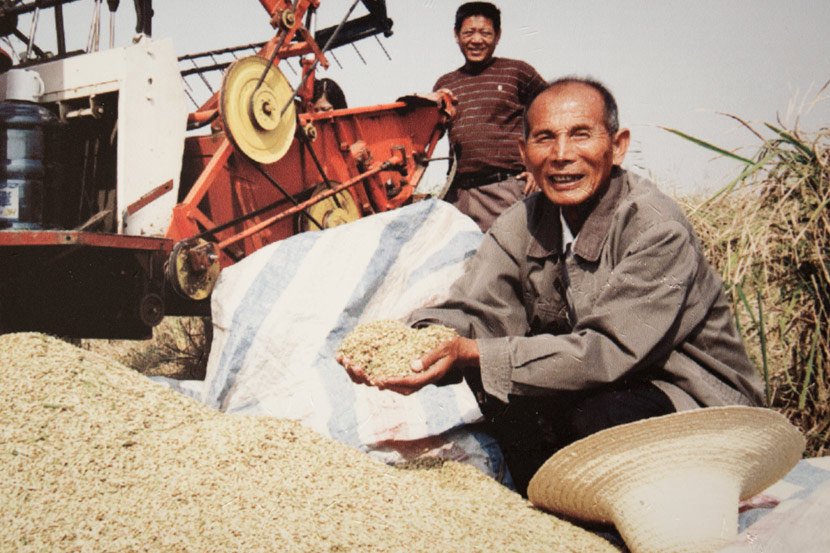 A Xiaogang farmer holds recently harvested grain in his hands in this archive photo. Courtesy of Yan Hongchang