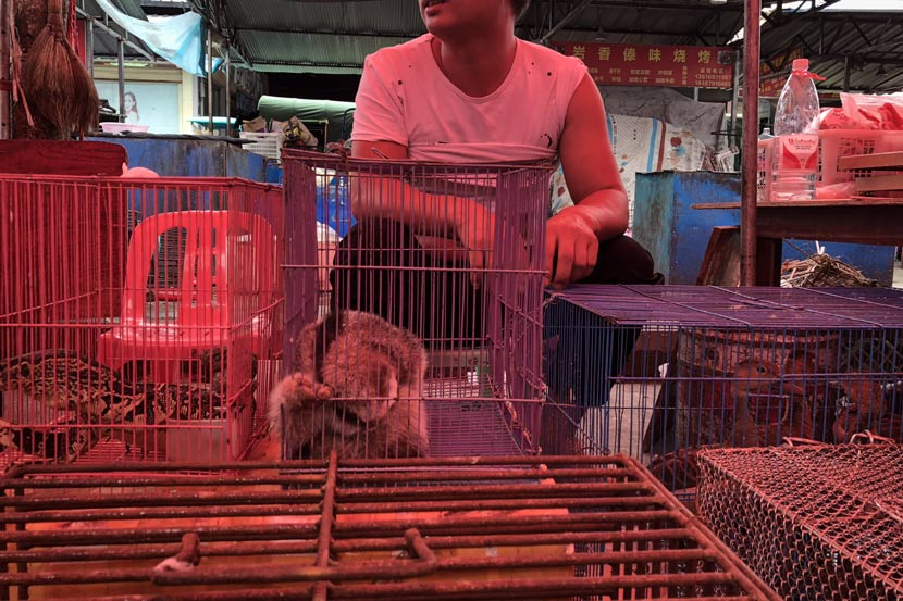 Monitor lizards and more are for sale, in Mong La, Myanmar, July 25, 2018. Smugglers can find pangolins, macaques, slow lorises, and other endangered animals in the market. Shi Yi/Sixth Tone