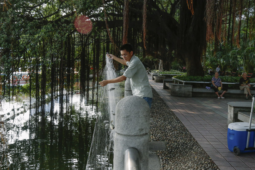 Gu Dan'gen pulls a net out of Dongshan Lake in a park in Guangzhou, Guangdong province, Sept. 11, 2018. Li You/Sixth Tone