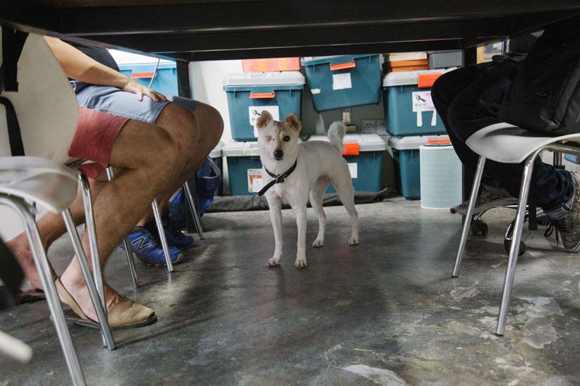 Xinchejian makers' pet dog, in Shanghai, June 16, 2017. Wu Huiyuan/Sixth Tone