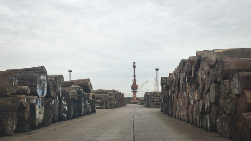 Wood is displayed at a warehouse in Zhangjiagang, Jiangsu province, October 2016. Wu Yue/Sixth Tone