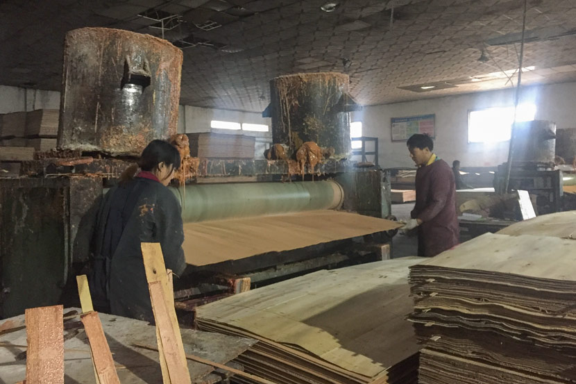 Workers make plywood in Xingang Group, Linyi, Shandong province, Jan. 16, 2018. Shi Yi/Sixth Tone