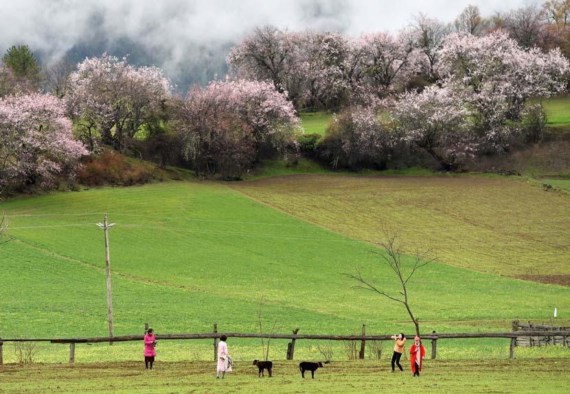 Travelers enjoy springtime in Linzhi, the Tibet Autonomous Region, April 2, 2019. Li Xin/Xinhua