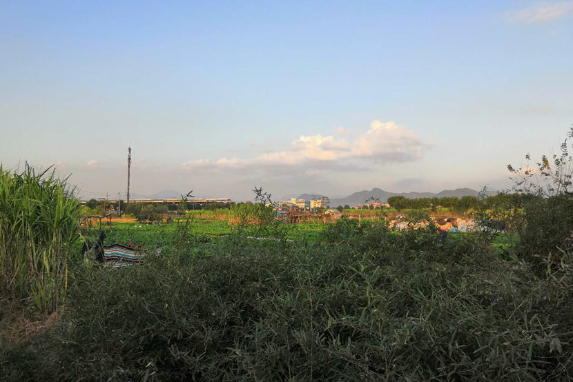 A field near the house Luo's parents rent in Linhai, Zhejiang province, January 2019. Ming Que for Sixth Tone