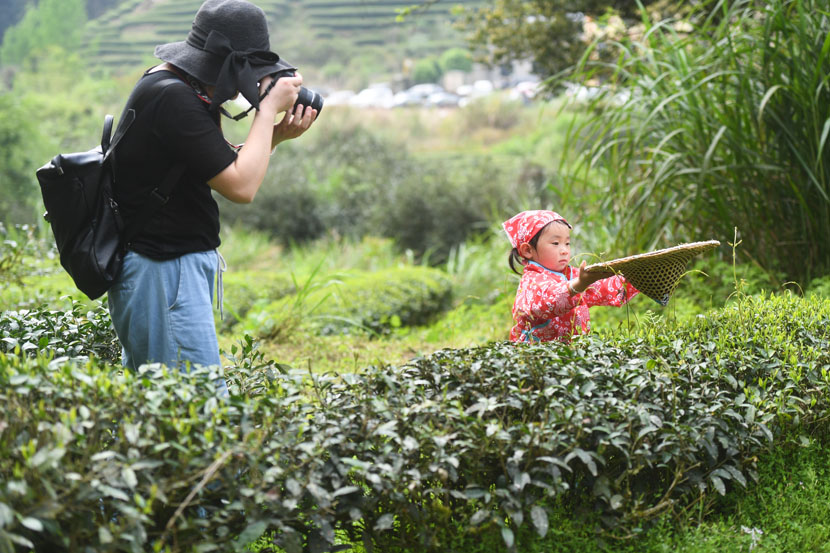 A tourist snaps a shot of a young girl trying to pick tea leaves in Wuyishan, Fujian province, April 9, 2019. Song Weiwei/Xinhua