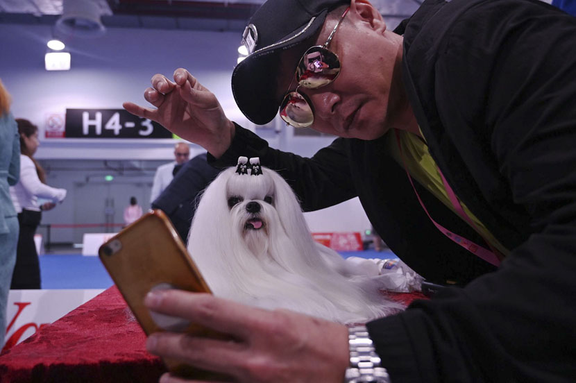 A man takes a selfie with a Maltese dog during this year's World Dog Show in Shanghai, April 30, 2019. Hector Retamal/AFP/VCG