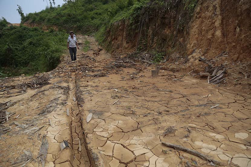 Mud cracks appear on a road near a eucalyptus plantation in Yong'an Village, Cenxi, Guangxi Zhuang Autonomous Region, April 29, 2019. Li You/Sixth Tone