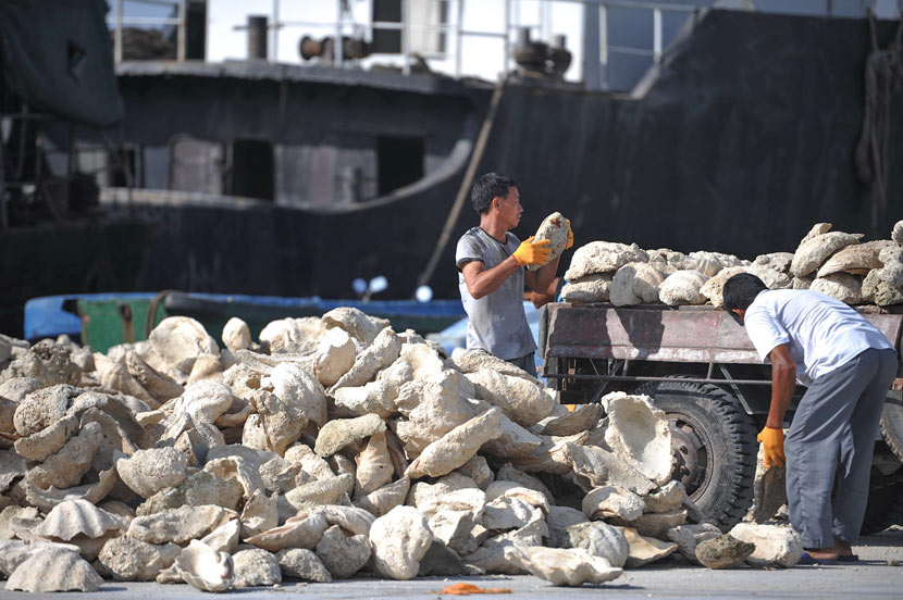 Workers unload giant clams at a dock in Tanmen, Hainan province, April 24, 2013. Meng Zhongde/VCG