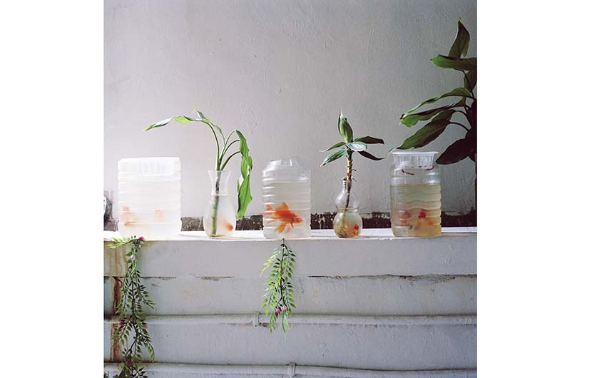 "Goldfishes in plastic bottles in Wenzhou, Zhejiang province, 2009. From ""Wenzhou"""