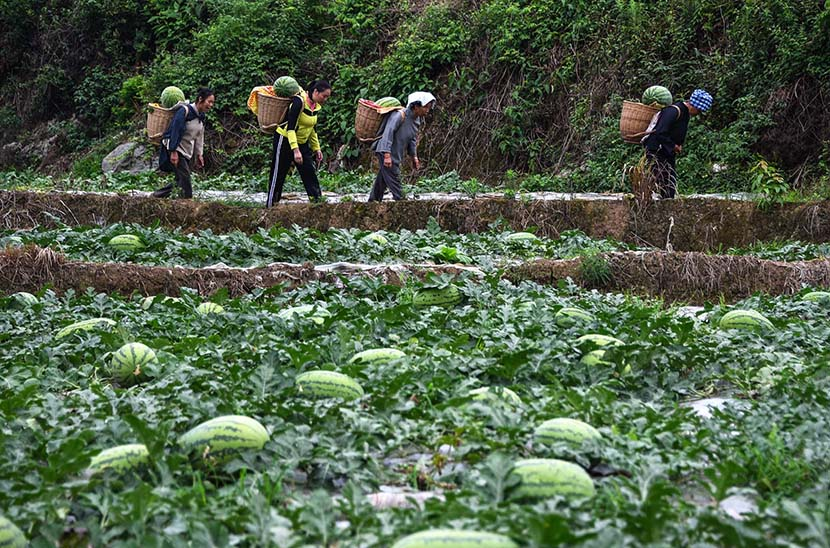 People carry watermelons in Daguan village, Guizhou province, May 30, 2019. Liu Chaofu/VCG