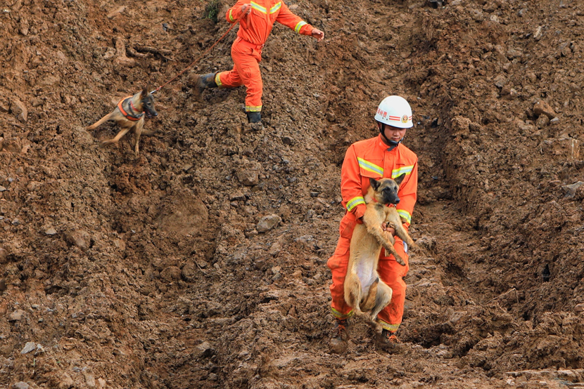 A rescuer evacuates a dog following a landslide that killed 15 people in Shuicheng County, Liupanshui, Guizhou province, July 25, 2019. IC