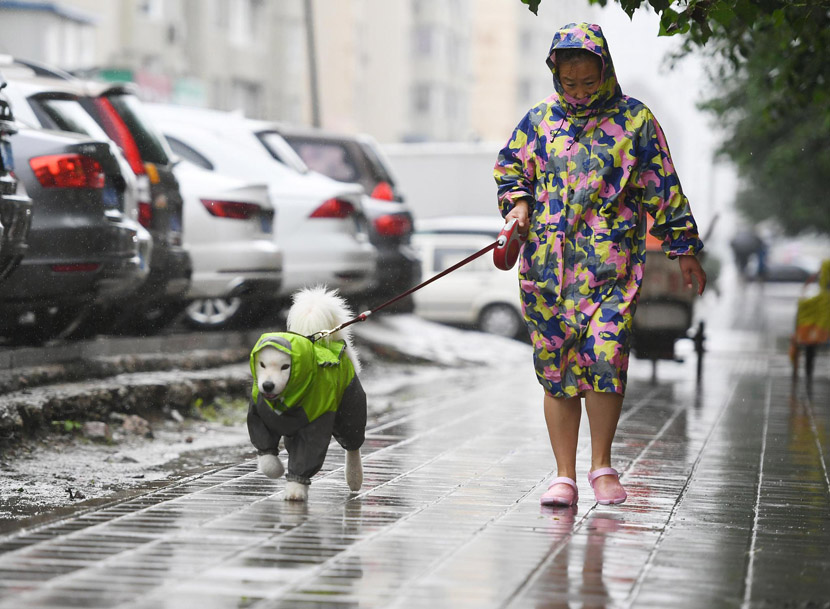 A woman and her dog, both wearing fashionable raincoats, go for a walk on a rainy day as Typhoon Lekima arrives in Changchun, Jilin province, Aug. 14, 2019. Zhang Yao/CNS/VCG