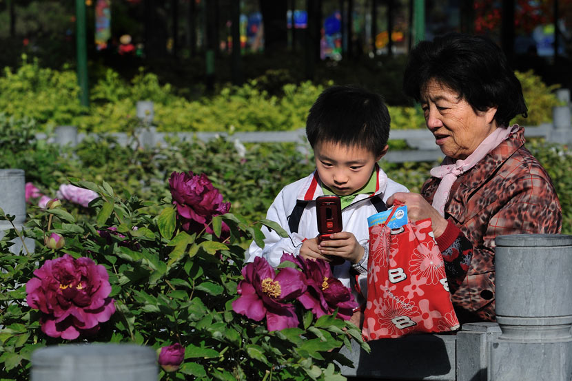 A boy takes pictures of peonies in Luoyang, Henan province, April 10, 2013. He Dongping/VCG