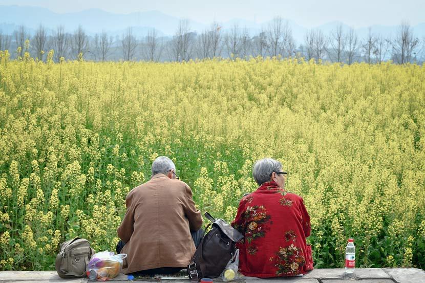 An elderly couple takes a break near a field of flowers in Chongqing, March 16, 2018. VCG