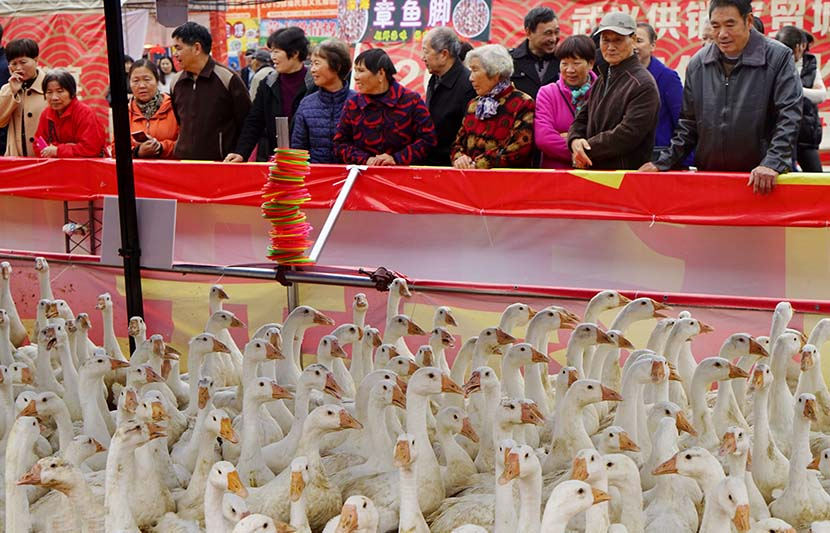People watch a loop-catching geese game during a folk temple fair in Wuyi County, Zhejiang province, Nov. 21, 2019. Zhang Jiancheng/VCG