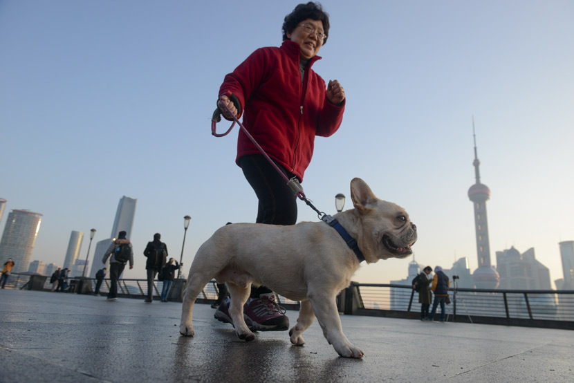 A woman walks her pet dog along the Bund in Shanghai, Jan. 1, 2017. Tuchong