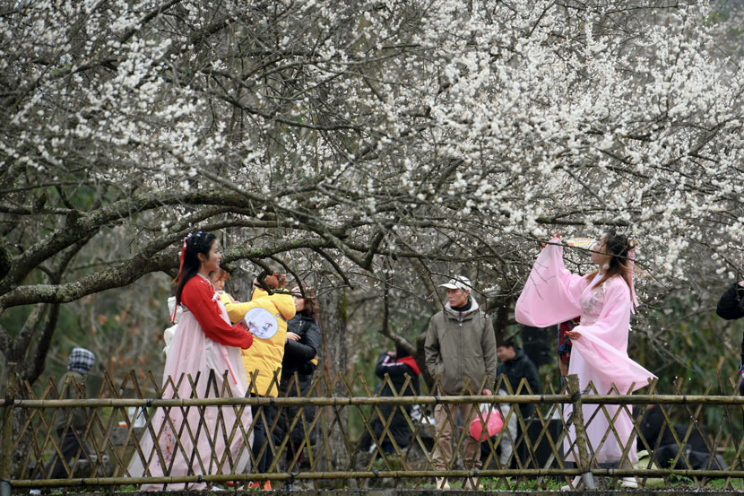 People enjoy plum blossoms in Libo County, Guizhou province, Jan. 14, 2020. Yang Wenbin/Xinhua