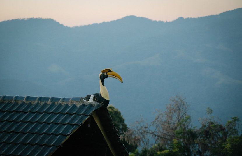 A hornbill ornament sits on the roof of a local resident's home in Yingjiang County, Yunnan province, Jan. 15, 2020. The hornbill is a holy animal for people of the Jingpo ethnic group, which is one of the main groups in Shiti Village. Li You/Sixth Tone