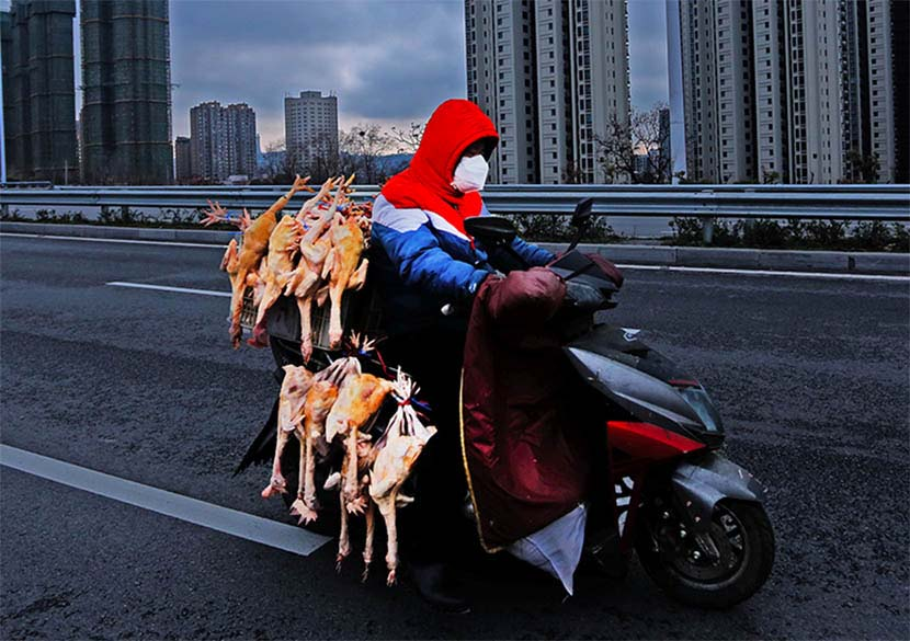 A delivery driver transports poultry on a motorcycle in Yichang, Hubei province, Feb. 17, 2020. Li Feng/CNS