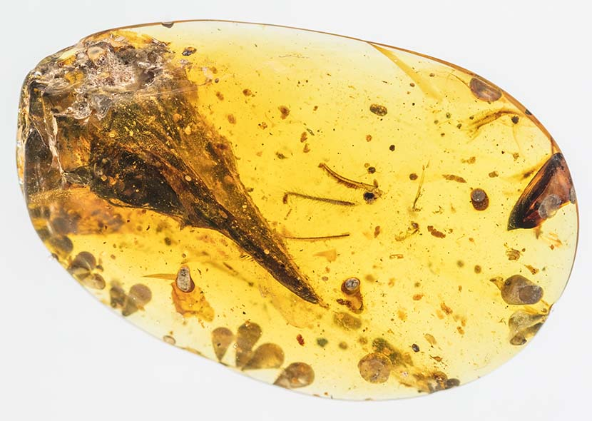 The piece of amber containing the preserved skull of Oculudentavis khaungraae. Courtesy of Xing Lida