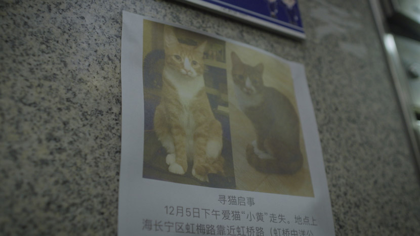 A notice for a missing cat in Shanghai, December 2019. Daniel Holmes/Sixth Tone