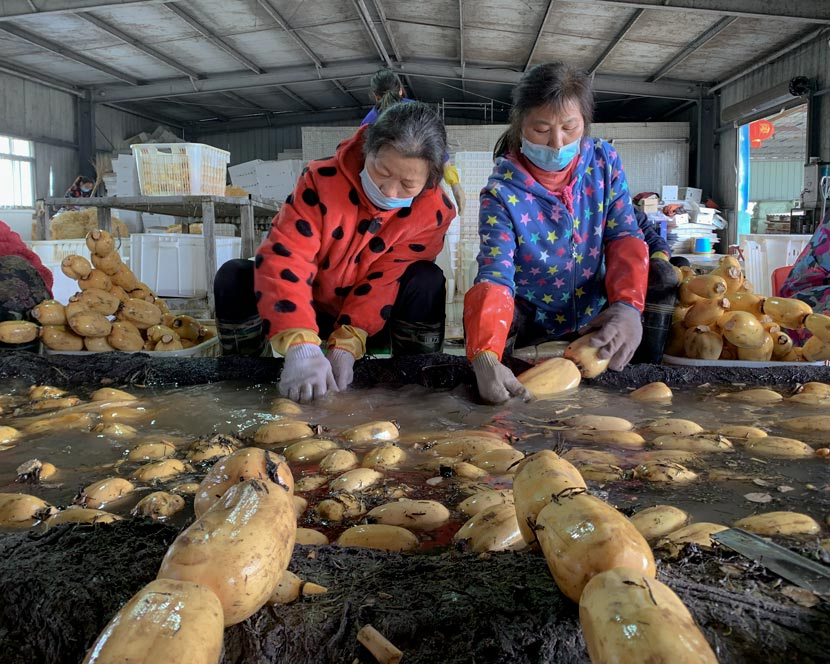 Workers clean lotus roots at a processing factory in Wuhan, Hubei province, April 2, 2020. Ye Ruolin/Sixth Tone