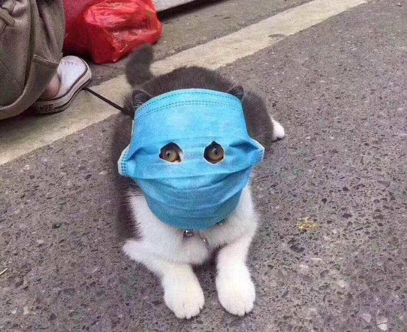 A social media post shows a kitten wearing a face mask, February 2020. From @里神楽  on Weibo