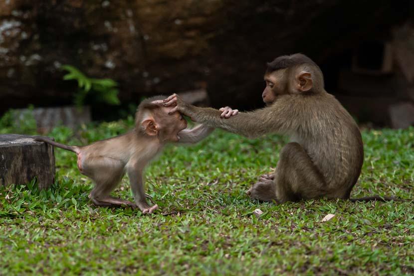 Two monkeys play inside an enclosure at Guangzhou Zoo in Guangzhou, May 14, 2020. Zhong Zhenbin/IC