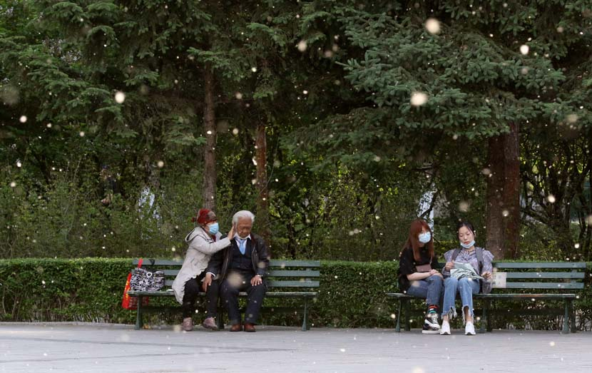 People sit on park benches as catkins fall from the willow trees around them in Harbin, Heilongjiang province, May 27, 2020. Zhang Shu/People Visual