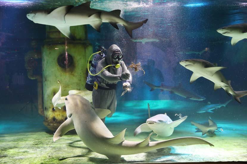 A diver feeds sharks at Nanjing Underwater World in Jiangsu province, May 30, 2020. Yang Bo/CNS/People Visual