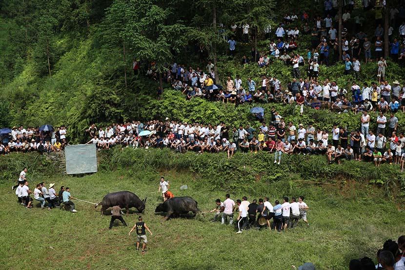 "People of the Dong ethnic minority watch bull fights during the ""June 6"" traditional festival, in Rongjiang County, Guizhou province, June 26, 2020. People Visual"