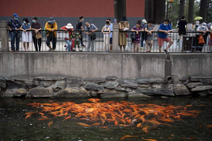 Visitors watch as koi feed at Beihai Park in Beijing, July 4, 2020. IC