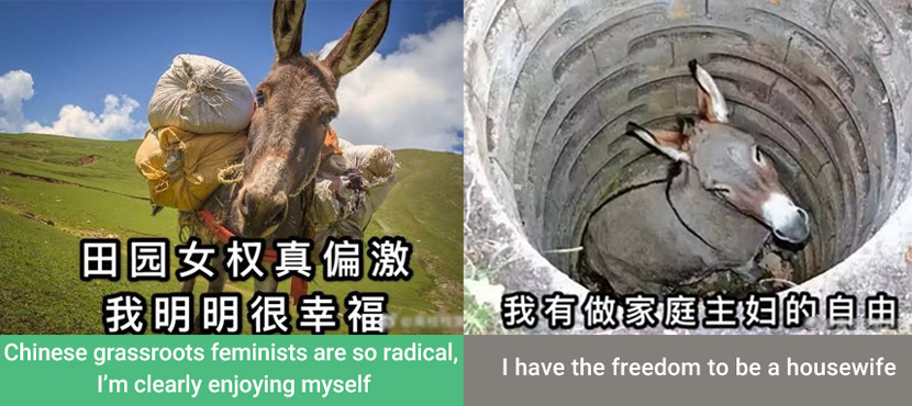 "Memes made by radical feminists on Weibo satirizing ""married donkeys."" From @离枝枝第五季 on Weibo"