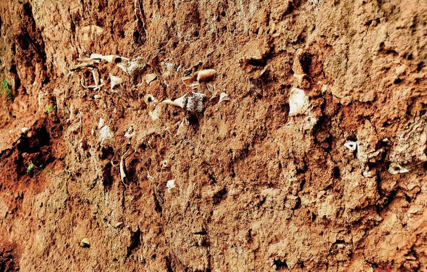 Ancient human bones in the newly discovered mass grave site in Gaoping, Shanxi province, July 8, 2020. From @红星新闻 on Weibo