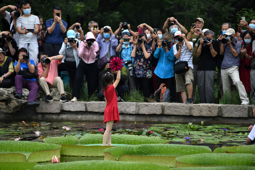 Photographers take pictures of a girl standing on large lily pad in the middle of a pond in Beijing, Aug. 1, 2020. Su Weizhong/People Visual