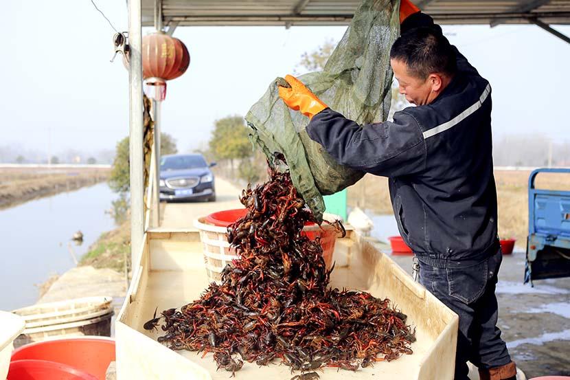 A man sorts crawfish in Huai'an, Jiangsu province, March 4, 2019. People Visual