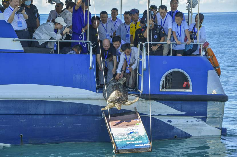 People set a sea turtle free in Lingshui, Hainan province, Aug. 8, 2020. Luo Yunfei/CNS/People Visual