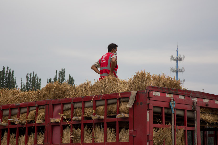 A vendor in a red identifying vest stands atop his truck in Xinfadi market, Beijing, Aug.15, 2020. The market had been closed since June 13, when a COVID-19 outbreak was traced back to the area. Shi Yangkun/Sixth Tone